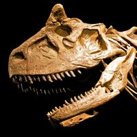 "Carnotaurus (""Meat-eating bull"")"