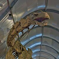 """Argentiosaurus (""""Argentine lizard"""")"""