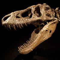 "Tarbosaurus (""Alarming Lizard"")"