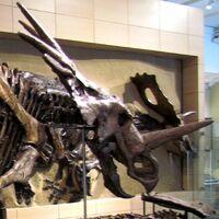 "Styracosaurus (""Spiked Lizard"")"