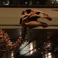 "Edmontosaurus (""Edmonton lizard"")"