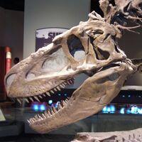 "Daspletosaurus (""frightful lizard"")"