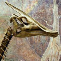 """Saurolophus (""""Lizard Crest"""")"""