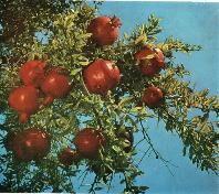 Из истории садоводства.jpg