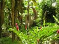 Seychelles 035