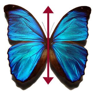 Αμφίπλευρη Συμμετρία