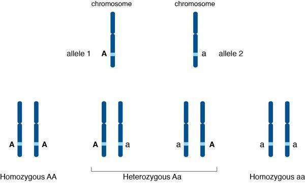 Γονιδιακή Αλληλομορφία