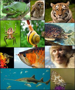 Animal diversity October 2007 .jpg