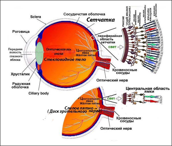 Периферийное зрение