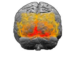 Зрительные отделы головного мозга