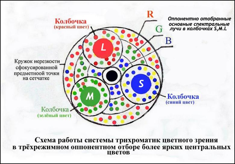 Острота зрения и мозаика блоков сетчатки
