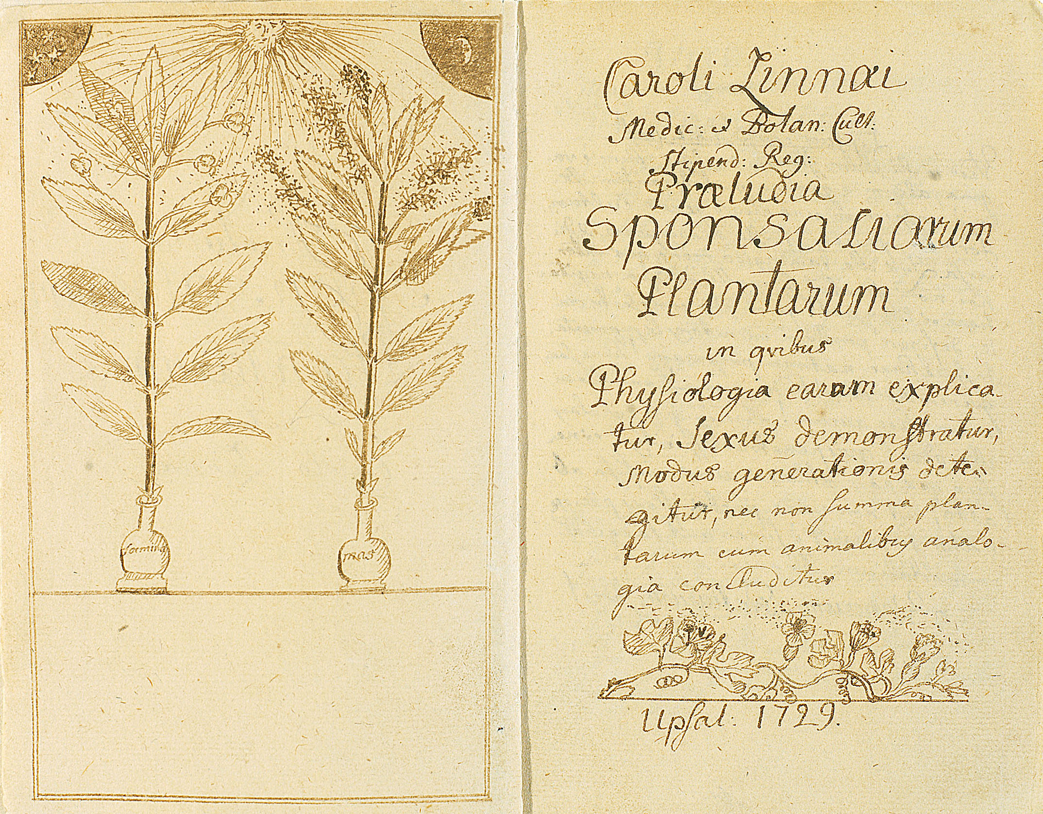 Ботаника 1