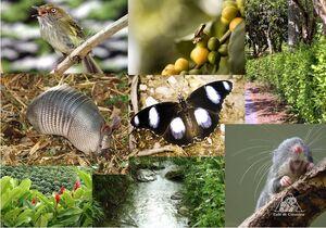 Очертания видового ареала определяются экологическими свойствами вида.jpg