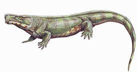 Лимносцелис