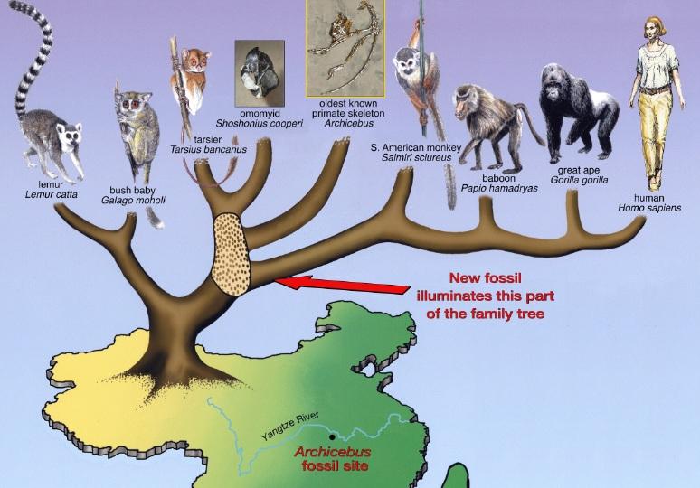Εξελικτική Βιολογία