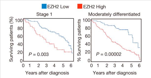 Подавление метилтрансферазы EZH2 может повысить эффективность противораковой терапии