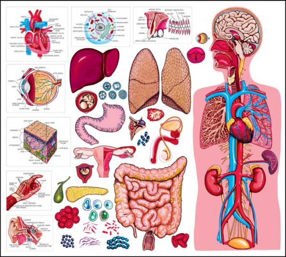 Αναγεννητική Ιατρική
