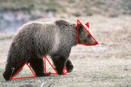 Bear(1)illuminati