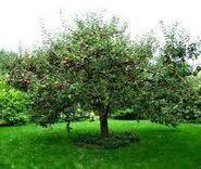 El árbol del todo