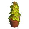 PottedVinePlant.png