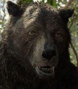Baloo in Mowgli Legend of the Jungle