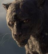 Bagheera in Mowgli The Legend of The Jungle