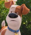 Max in The Secret Life of Pets-0
