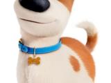Max (The Secret Life of Pets)