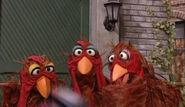 Chickens Sesame Street