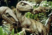 Velociraptors-jurassic-park