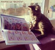 Pinpin lit bichon by princekido d6wwyt8