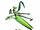 Mantis (Kung Fu Panda)
