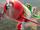 El Chupacabra (Planes)