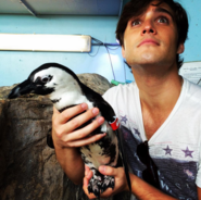Cute Diego and cute penguin