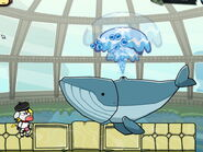 Blue Whale nostrills