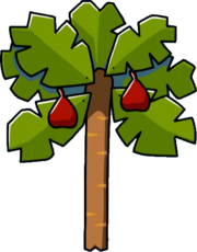 Fig Tree.png