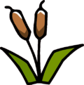 Reed Plant.png