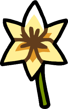Lily (Flower)