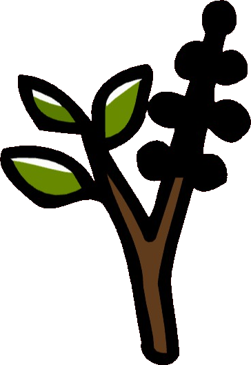 American Pokeweed