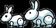 Bunny vs Rabbity