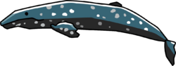 Grey whale.png