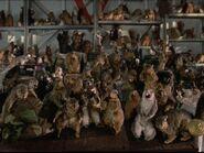 Squirrel Army