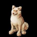 Shiba inu mota de algodón.png