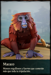 Macacos.png