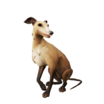Whippet beis.png