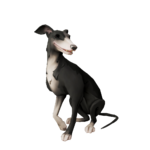 Whippet de calcetines plateados.png