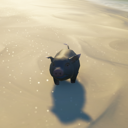 Black Coated Pig.png