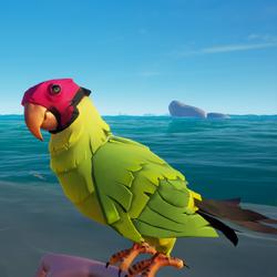 Plumpcap Macaw1.png