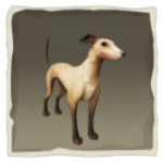 Fawn Whippet inv.png
