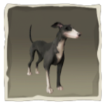 Silverfoot Whippet inv.png